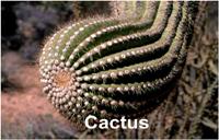 cactus_14890txt200