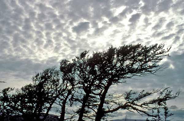 Clouds Newf_9269D1W