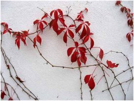 Last leaves of sum