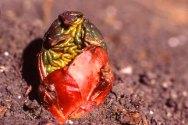Rhubarb with brains
