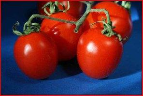 Tomato foursome