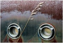 Grass and rust