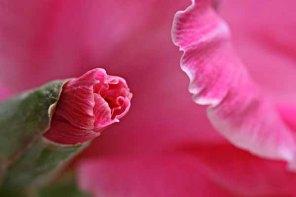 Teenage gladiolus