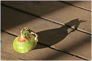 Onion and shadow