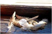 Feathers on window sill