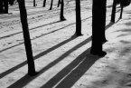 "December 2010: Diagonals, ""Tree shadows"""