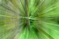 "February 2010: Motion, ""Green and brown"""
