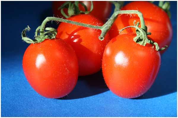 WHVB_Tomatoes2014ia