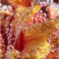 Bubbles 2005