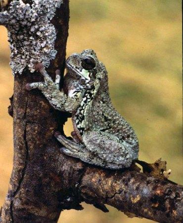 Frog_13373
