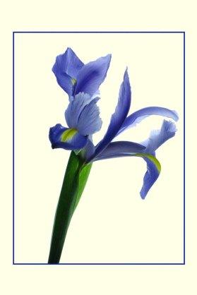 Iris_1341b3COS