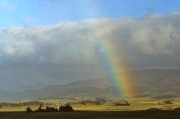 Rainbow_8550