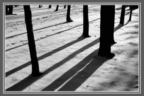 TreeShad_pb9