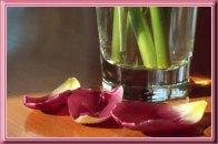 Tulip_15894pb9