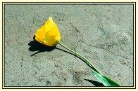 Tulip_prb2