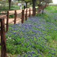 Wildflower Seed Farm