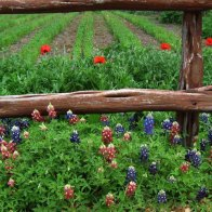 Wildflower Seed Farm