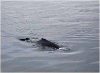 A dolphin??