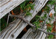 Old rail fence