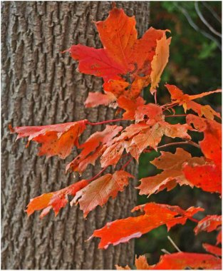 Fall leaves Georgian Bay