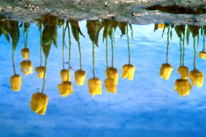 """October 2016: Reflections, """"Upside down"""""""