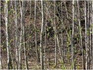 Spring in the ravine