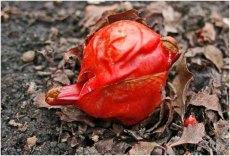 15rhubarb_0367gr