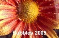 bubbles_16973txt