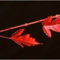 leaves_12487gr