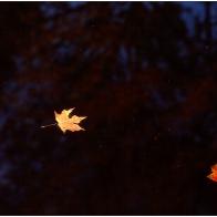 leaveswater_7476-1gr