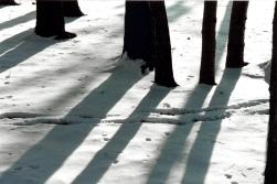 TreeShadow3323