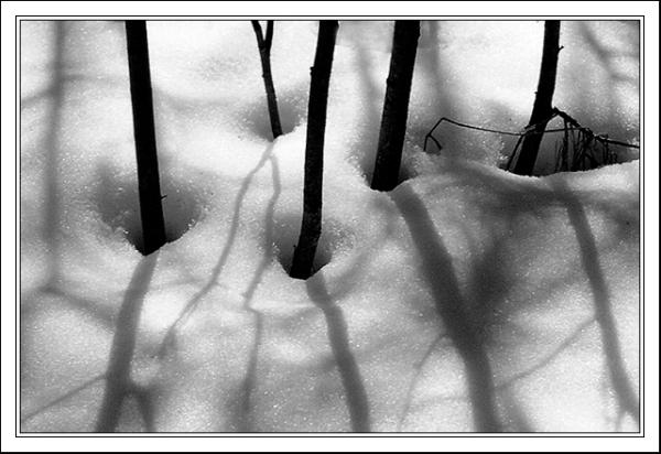 Shadows_11312M2gr2