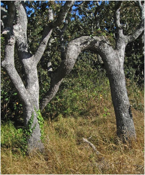 Tree trunks near the coast