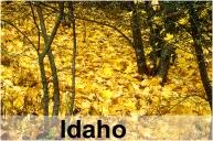Leaves_10094GRT