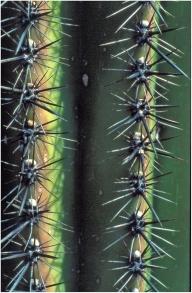 Arizona 1999