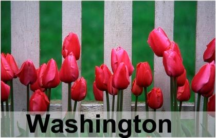 Tulips_12013GRT