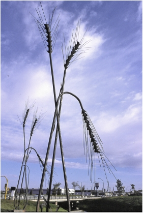 Wheat sculpture Saskatoon 2003