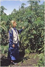 In John Toogood's hemp plot 1995