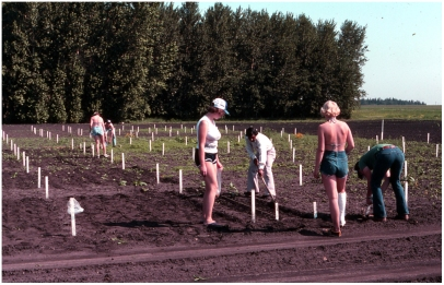 Students planting Canada thistle 1980