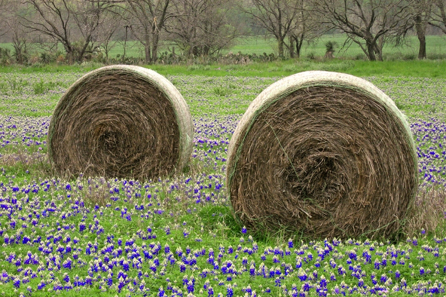 Cyclones and bluebonnets