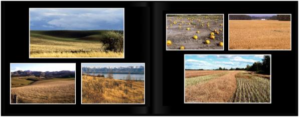LandscapesPg_1415a