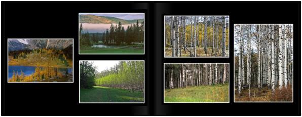 LandscapesPg_1617a
