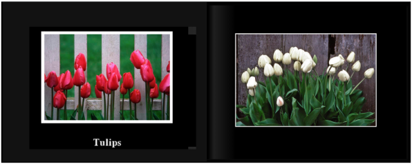 TulipsPg_0001a