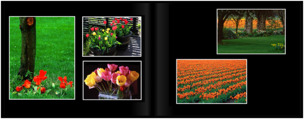 TulipsPg_0203a