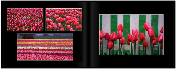 TulipsPg_0405a