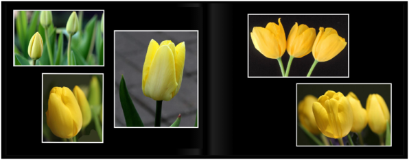 TulipsPg_0809a