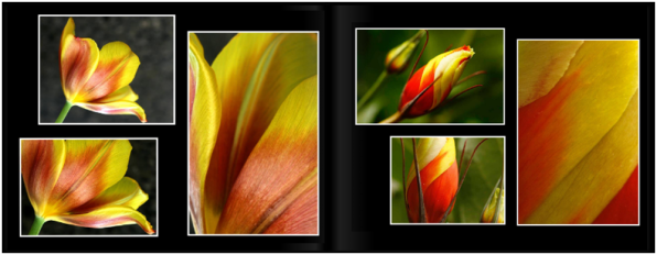 TulipsPg_1011a