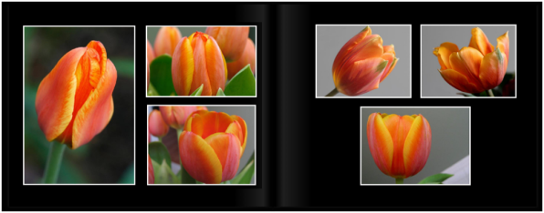 TulipsPg_1415a