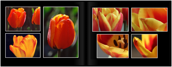 TulipsPg_1617a