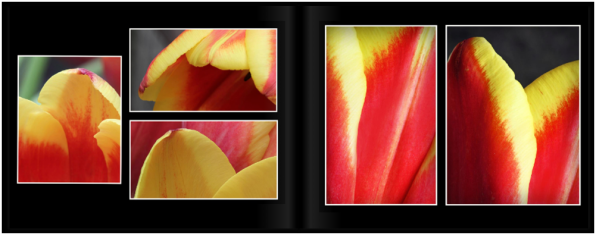 TulipsPg_1819a